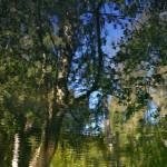 reflexie jarnej prírody