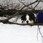 oddych v snehu