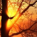 slnko v hmle