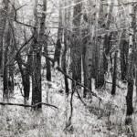 sitnianske lesíky