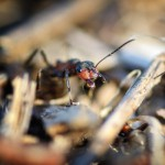 mravce robotujú