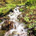 potok na Sitne